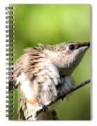 Hummingbird - Ruby-throated Hummingbird - Stretch Time Spiral Notebook