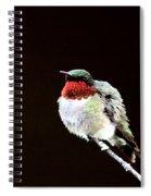 Hummingbird - Ruffled Feathers Spiral Notebook