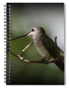 Hummingbird - Under The Canopy Spiral Notebook