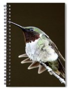 Hummingbird - Wide Tail Spiral Notebook