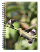 Hummingbird - You Have Done It Now Spiral Notebook