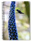Hummingbird And Flower Spiral Notebook