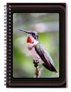 Hummingbird Card Spiral Notebook