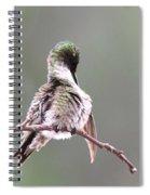 Hummingbird - Cleaning Up Spiral Notebook