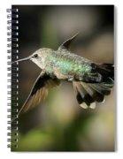 Hummingbird Fly By Spiral Notebook