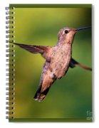 Hummingbird Hello Spiral Notebook