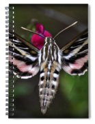 Hummingbird Moth - White-lined Sphinx Moth Spiral Notebook