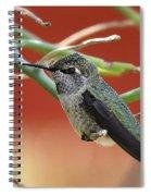 Hummingbird Nap Time  Spiral Notebook
