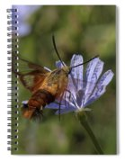 Hummingbird Or Clearwing Moth Din137 Spiral Notebook