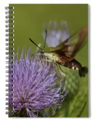 Hummingbird Or Clearwing Moth Din178 Spiral Notebook