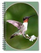 Hummingbird Photo - Light Green Spiral Notebook