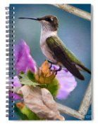 Hummingbird Picture Pretty Spiral Notebook