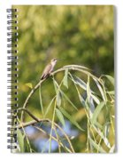 Hummingbird Resting In The Willow Spiral Notebook