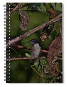Hummingbird Waiting For Dinner Spiral Notebook