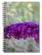 Hummingbird's Delight Spiral Notebook