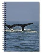 Humpback Flukes Spiral Notebook