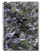 Hundreds - Tree Swallows Spiral Notebook