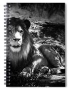 Hungry Lion Spiral Notebook