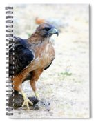 Hungry Red Teiled Hawk Spiral Notebook