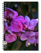 Hyacinth Bean Spiral Notebook