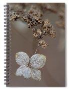 Hydrangea Arborescens Dry Flower Head In Winter Spiral Notebook