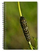 Hymenoptera Larva 2 Spiral Notebook