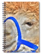 I Know   You Just Lovvvve My Hairdo Don T Ya Spiral Notebook