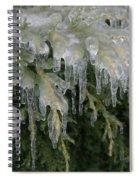 Ice-coated Arborvitae Spiral Notebook