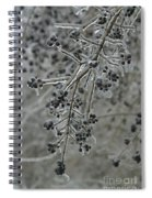 Ice- Coated Hawthorn Branch Spiral Notebook