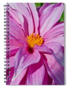 Ice Pink Dahlia Spiral Notebook
