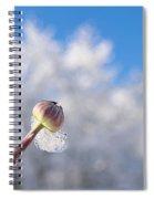 Iced Dogwood Spiral Notebook