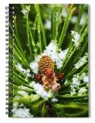Icy Pine 1 Spiral Notebook
