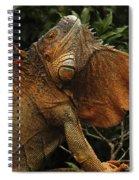 Iguana Costa Rica Spiral Notebook