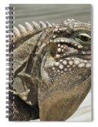 Iguana Two Spiral Notebook