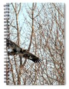 Immature Bald Eagle Flying Spiral Notebook