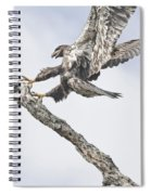 Immature Eagle At Play Spiral Notebook