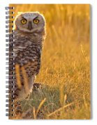 Immature Great Horned Owl Backlit Spiral Notebook