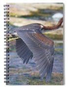 Immature Tricolored Heron Flying Spiral Notebook