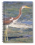 Immature Tricolored Heron Standing At High Tide Spiral Notebook