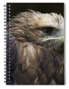 Imperial Eagle 4 Spiral Notebook