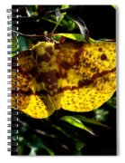 Imperial Moth Din053 Spiral Notebook