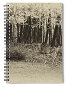 In A Yellow Wood Antique Spiral Notebook