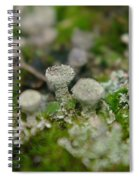 In The Land Of Little Mushrooms  Spiral Notebook