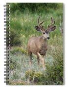 In Velvet Spiral Notebook