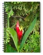 Indian Pink 2 Spiral Notebook