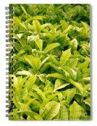 Indian Variety Of Tea Spiral Notebook