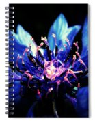 Indigo Bachelor  Spiral Notebook