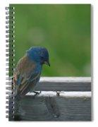 Indigo Bunting And Friend Spiral Notebook