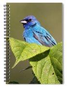 Indigo Bunting Spiral Notebook