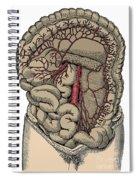 Inferior Mesenteric Artery And The Aorta Spiral Notebook